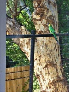 Visiting birds.
