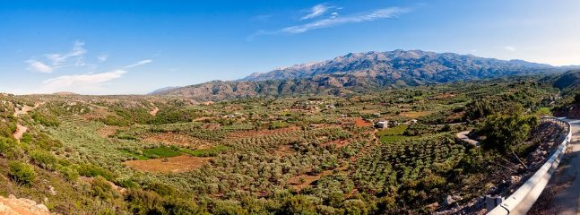 you can discover the hidden beauties into the olives and ingigenous flora of Crete.!!!
