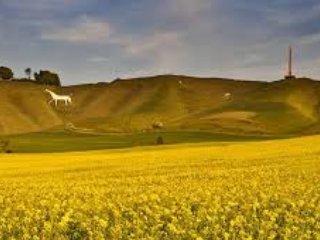 Maravillosos paseos para ver los caballos blancos de Wiltshire