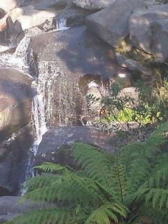 Local Kaimai falls.