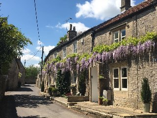 Wisteria in full bloom from early May to June