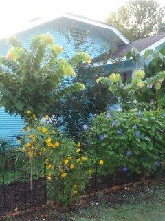 Full Bloom Summer