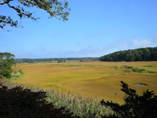 Expansive Salt Marsh Views Near Rock Harbor