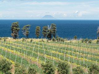 Tenuta Rasocolmo, Winery & Hospitality
