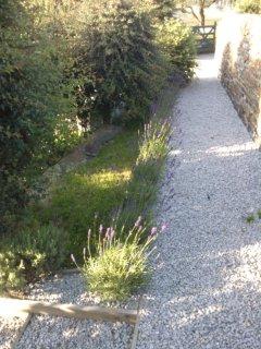The lavendar walk in the garden