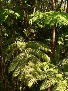 Rain forest hikes