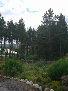 Strathspey Steam Train from the garden!