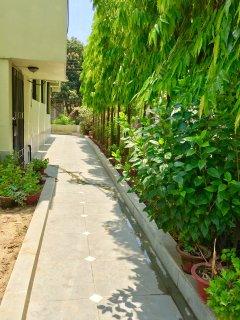 Greenery surrounding the house