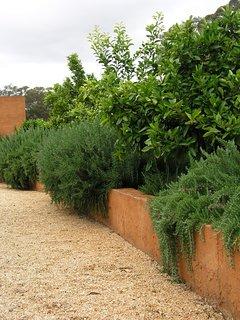 The courtyard citrus garden