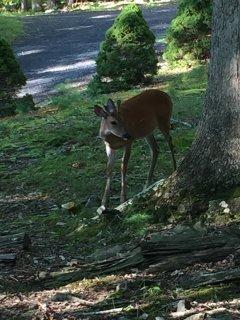 Enjoy the wildlife, Turkeys and deer frequent the area: Meet 'Buck' :)