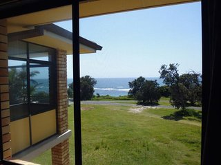 20 GREVILLIA - Minnie Water, NSW