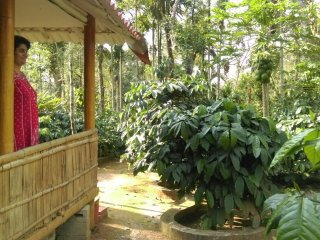 THE BED COFFEE-Bamboo Cottage Stay with BONFIRE!-near COORG trekking point.
