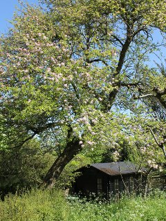 The orchard and summerhouse