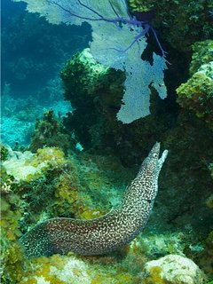 Photo taken on Cayman Brac.