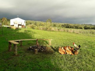 Yurt in Native Forest with Volcano Views + Countryside Breakfast