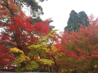 Located near many of Kyoto's famous autumn leaves (koyo) spots.