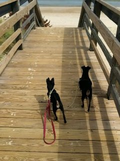 Your pups can enjoy the dog friendly beach! Summer hours are before 10am and after 6pm