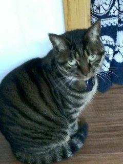 Frankie, our super friendly cat.