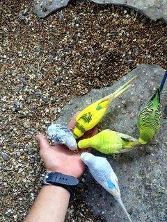Parakeet Aviary