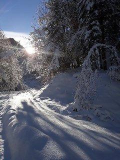 Chemin menant à la forêt
