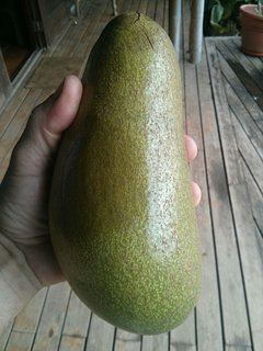 We have 9 Avocado trees on the property.