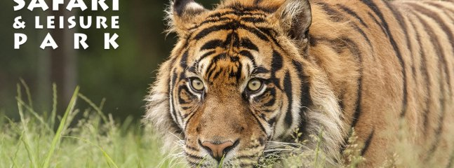West Midlands Safari and Leisure Park, a short drive away.