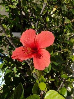Admire the flowers - Villa Miraflores
