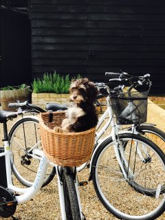 Electric bikes for rent plus dog friendly