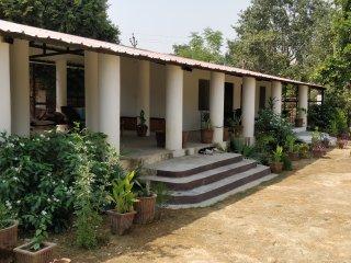 Chinkara Ranthambore 2