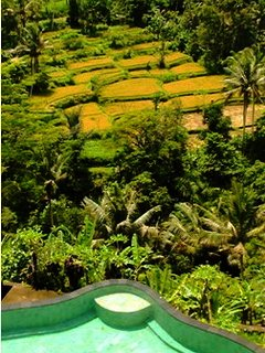 Rice Terrace and Pool