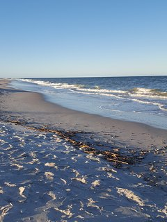Enjoy shelling and hunting for sharks teeth!