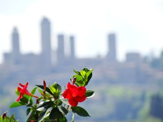 Montegonfoli Three, countryside apartment in San Gimignano for 4+2 guests