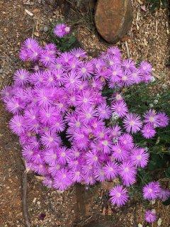 Vibrant wildflowers in season