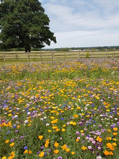 The Summer Flower Meadow in July