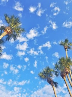 Destin Sky & Palm Trees