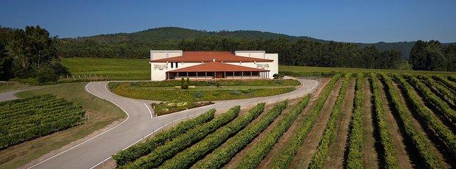 Bodegas y degustación de vinos.