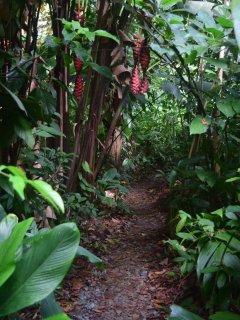 follow the winding garden path..