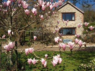 MAGSN Cottage in Dawlish