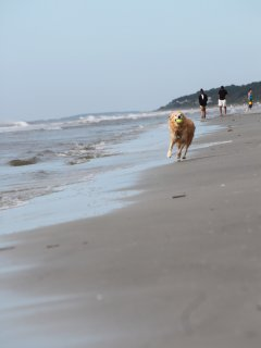 Our pup Lefty,running on the beach  2004 - 2015