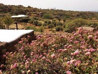 Dammuso per meravigliose vacanze a  Pantelleria