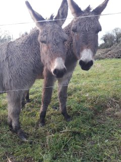 Millie and Mollie who frequently stay at Ballygown Cottage