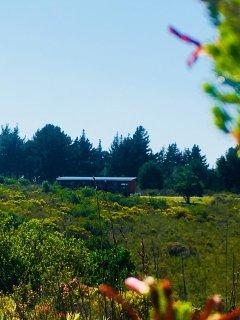 A piece of Eden, nestled in the beautiful fynbos