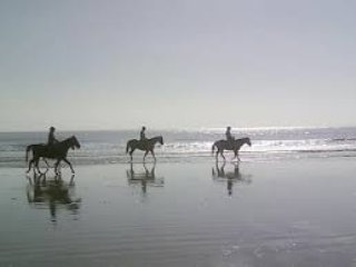 Ride a horse on the beach for a uniquely Seabrook experience