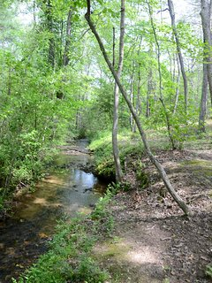 Kyle Creek is easily accessible and very gentle.