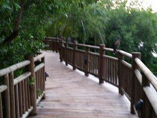 Grand Mayan Riviera Maya