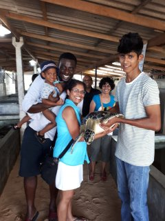 visit the turtle hatchery 15 minutes away