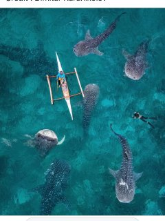 Come to Isla in the summer to swim with whale sharks! Its a once in a lifetime experience!