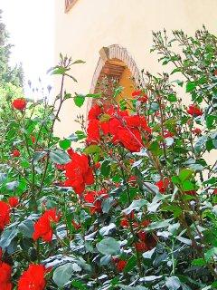 Beautiful Flowers Around the House