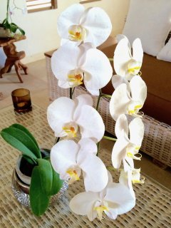 Orchids abound in Bali!