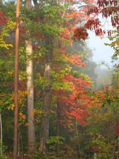 Our mature forest in the fall has a beautiful rainbow of colors